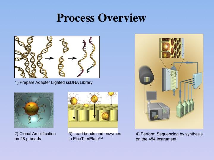Mammoth genome project psu ccuart Choice Image